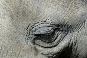 Tearing elephant By ArtTower on Pixabay