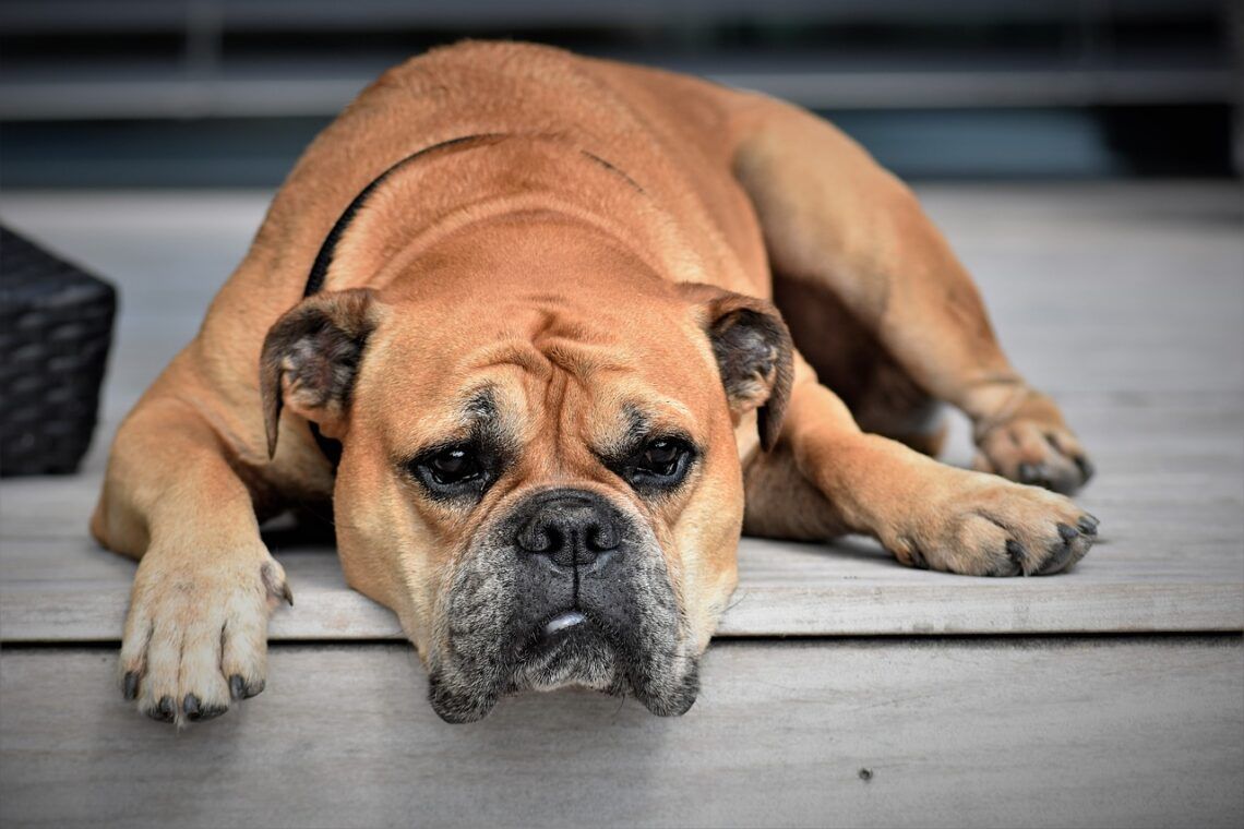 A Resting Dog - Image by Pitsch from Pixabay